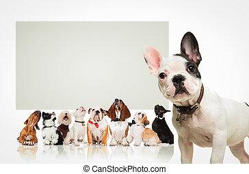 junger hund, vor, viele, hunden, sehen aufwärts, werbewand