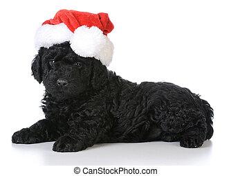 junger Hund, Weihnachten