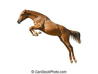 junger, kastanie, pferd springen