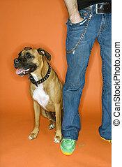 junger mann, mit, boxer, dog.