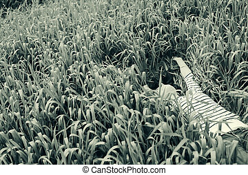junger, schöne frau, liegen, auf, grünes gras