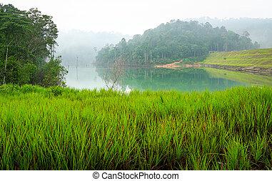 Jungle and lake landscape