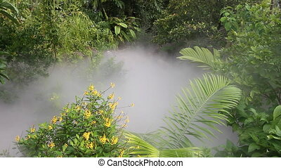 Jungle Background - Mist moving through a dense tropical...