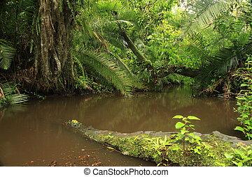 Jungle - Bigodi Swamps - Uganda - Bigodi Wetlands in Uganda...