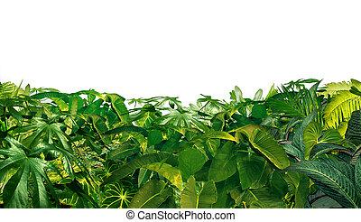 Jungle Border as a horizontal tropical plant design element...