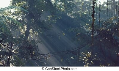 jungle, brouillard, brumeux, rainforest