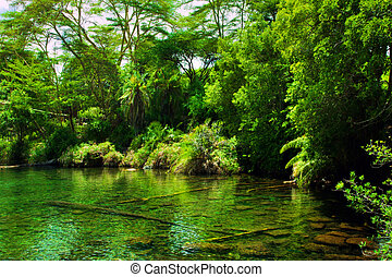 Jungle, bush and water spring in Africa. Tsavo West, Kenya