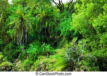 Jungle, bush trees background in Africa. Tsavo West, Kenya -...
