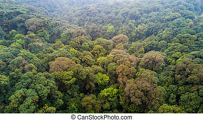 Jungle canopy aerial view