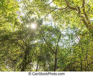 Jungle Canopy Africa