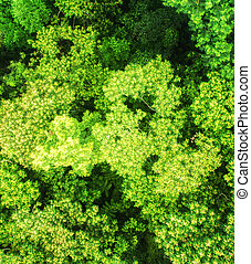 Jungle Canopy as seen from above