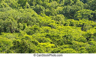 Jungle Canopy Tikal Guatemala