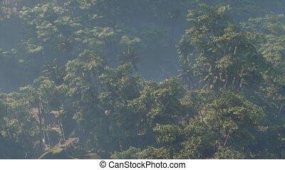 jungle, couvert, rainforest, paysage, brouillard