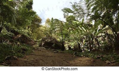 jungle, désert, angle, randonnée, bas, thaïlande, ...