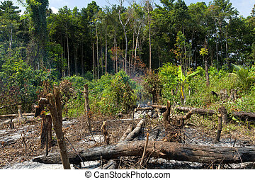 jungle deforestation - tropical rainforest deforestation in...
