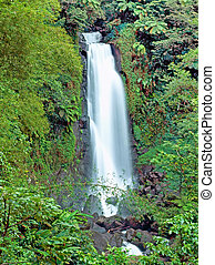 Trafalgar falls - Jungle famous Trafalgar falls in Dominica...