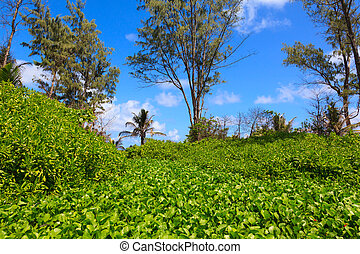 Jungle forest scenic background.