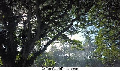 Jungle forest shot - A full shot of a jungle forest. Camera...