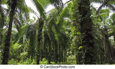 Jungle forest shot - A full shot of a jungle forest. Camera...
