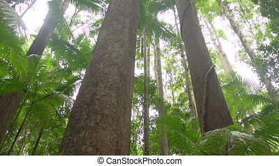 Jungle forest trees shot - A medium shot of jungle trees....