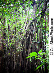 Jungle forest. Tropical trees in Asia. Beautiful adventure nature landscape background
