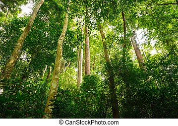 Jungle forest with tropical tree