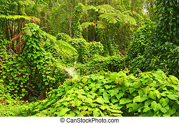 Jungle, Hawaii Volcanoes National Park, Big Island, Hawaii, ...