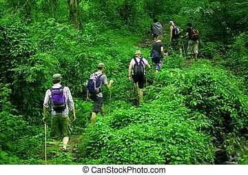 Jungle hike - Group of trekkers hike through lush green...