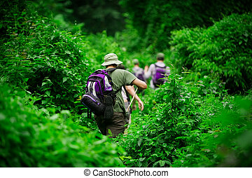Jungle hike - Group of trekkers hiking through lush jungle