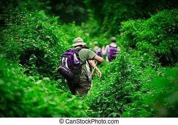 Group of trekkers hiking through lush jungle