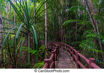 jungle hiking trail - local landmark in Krabi Park, Thailand