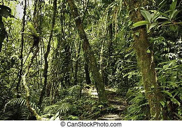jungle in Bolivian pre mountain rainforest in Parque Carascu