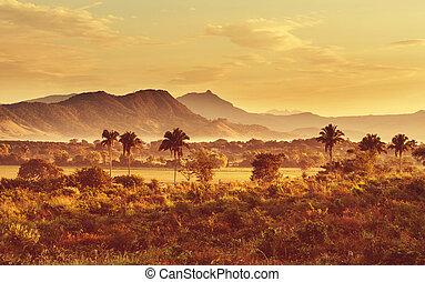 Jungle in Mexico - Tropical jungle in Mexico
