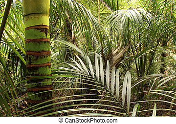 Jungle - Lush green foliage in tropical jungle