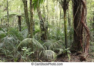 Jungle - New Zealand tropical jungle forest