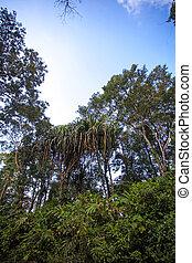 Jungle of Thailand on Koh Samui island