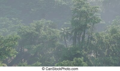 jungle, paysage, couvert, rainforest, brouillard