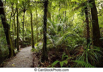 Jungle - Lush plants in tropical jungle