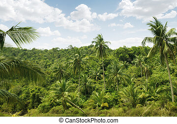 jungle - Panoramic color view of nice color misty tropical...
