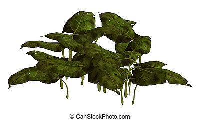Jungle Plant - Green jungle plant on a white background