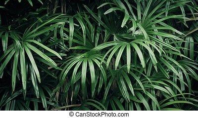 Jungle Plants In Gentle Breeze
