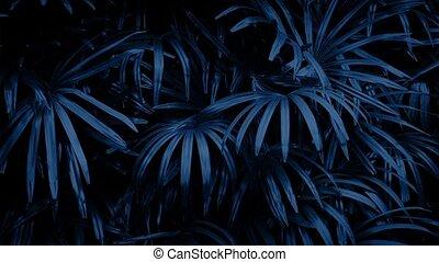 Jungle Plants Swaying At Night