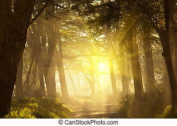 Jungle - rain forest