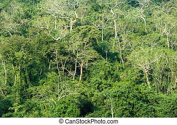 Jungle rain forest