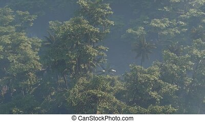 jungle, rainforest, brouillard a couvert, paysage