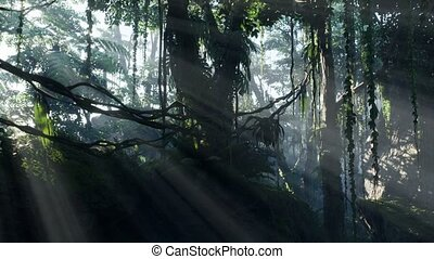 jungle, rainforest, brouillard, brumeux