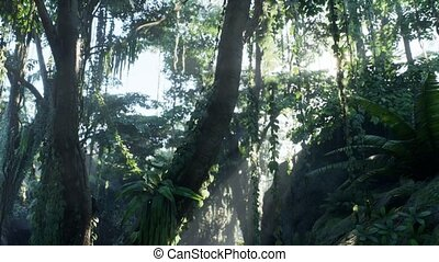 jungle, rainforest, brumeux, brouillard