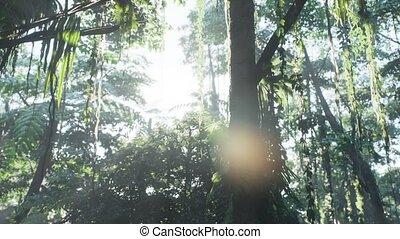 jungle, rainforest, brumeux, brouillard