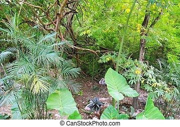 Jungle rainforest Yucatan Mexico Central America plants