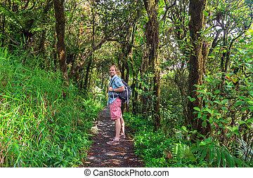 jungle, randonnée, touriste